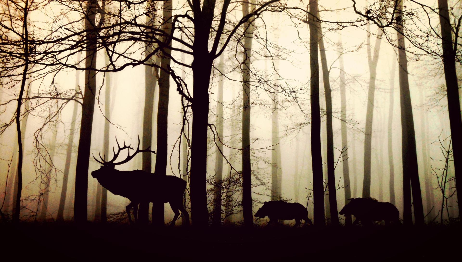 生物多様性 社会課題
